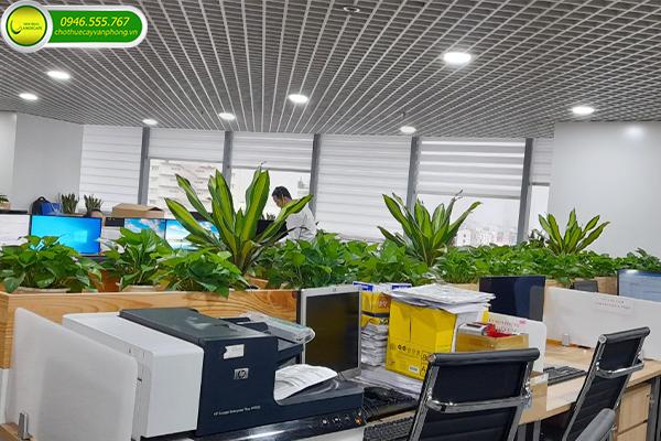 Báo giá cây cảnh văn phòng tại TPHCM