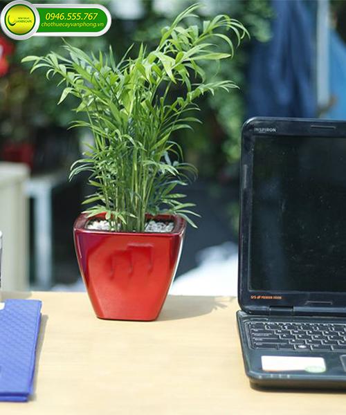 cây lọc không khí văn phòng