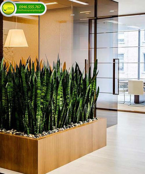 cây cảnh trồng trong văn phòng