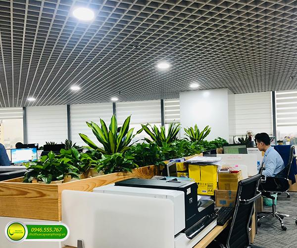 cung cấp cây xanh văn phòng