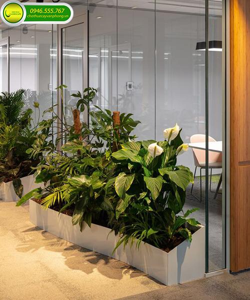 hoa trồng văn phòng đẹp