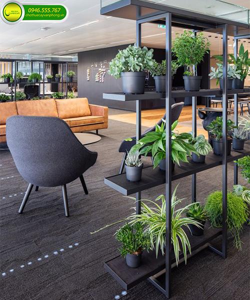 hoa trồng văn phòng